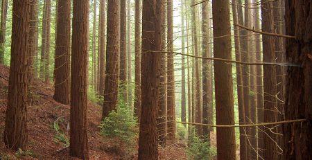 Bosque de Secuoyas de Cabezón de la Sal en Cantabria