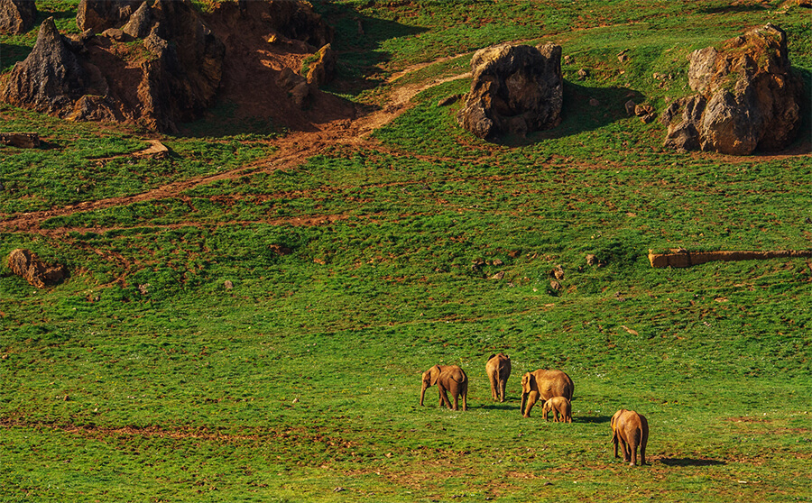 elefantes Parque de la Naturaleza de Cabárceno