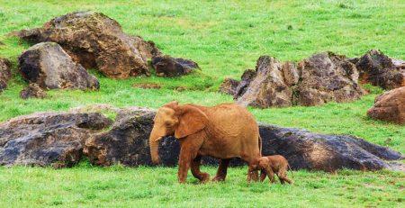 parque de cabárceno elefantes