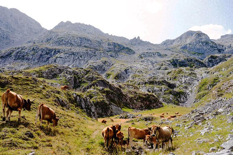 Sotres Cabrales Asturias