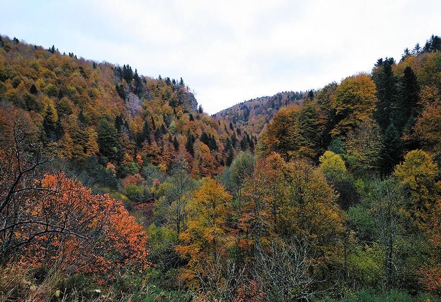 selva de Irati bosque Navarra