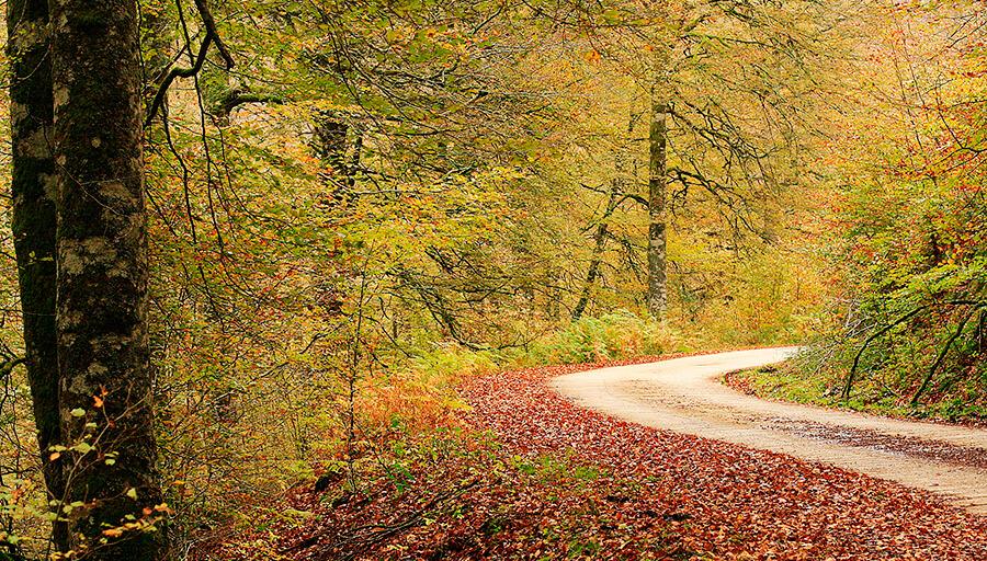 Selva de Irati senderos