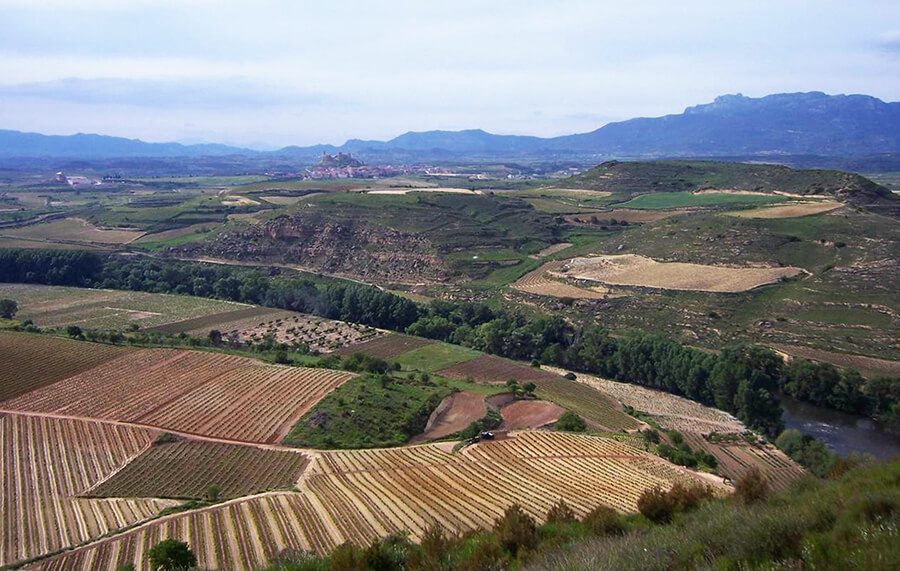 castillo de Davalillo vistas de los viñedos