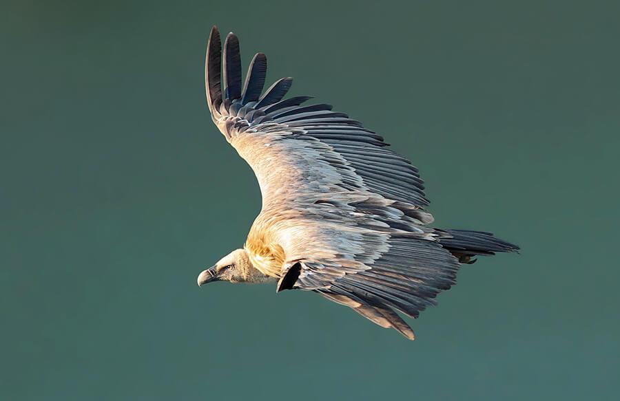 Parque Nacional de Monfragüe avistamiento de aves