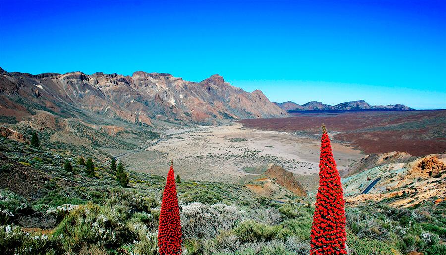 fauna y flora Parque Nacional del Teide