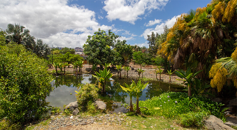 qué ver en Santa Cruz de Tenerife Palmetum palmeras