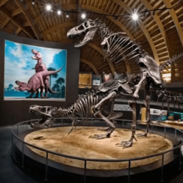 Entrada Museo del Jurásico de Asturias
