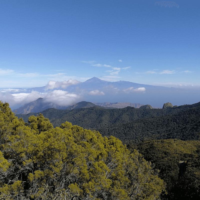 Parques Nacionales de Canarias - Parque Nacional de Garajonay